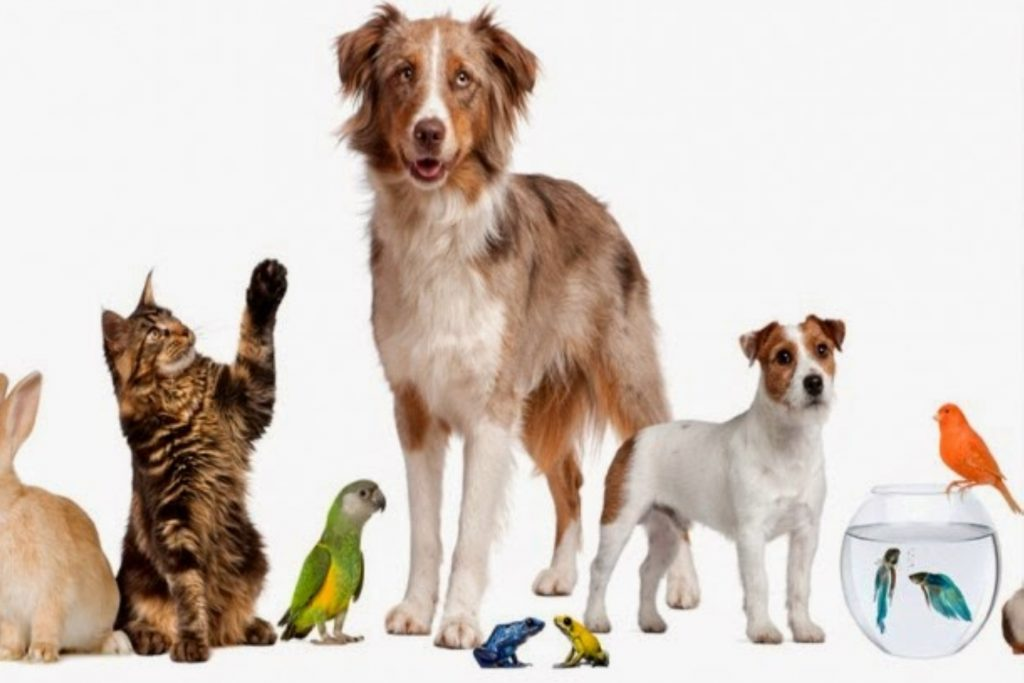 A List of Organizations Specialized in Animal Adoptions ...