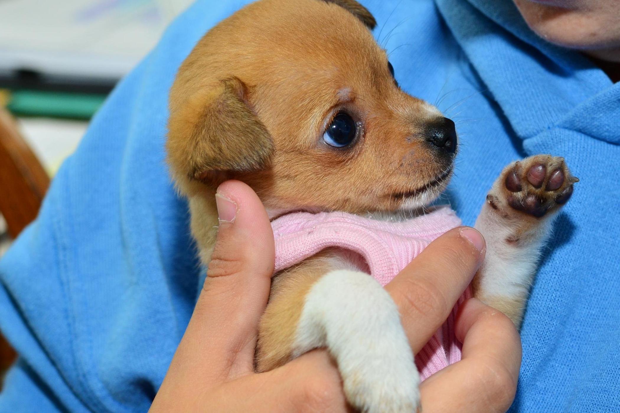 tiny-pup
